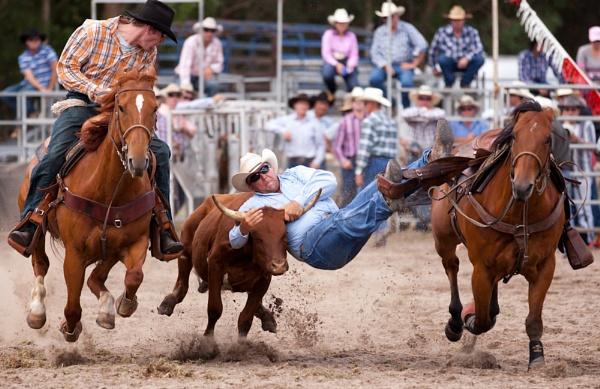 Steer Wrestling IX by steve_evans