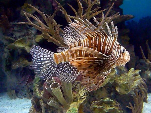 aquarium fish by jammbulator