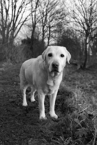 Sammy\'s Walk by electricratphotography