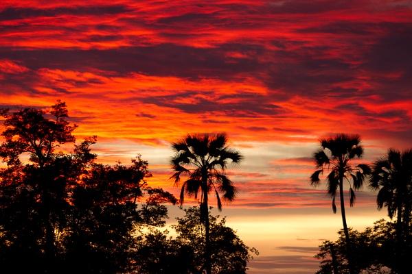 Okavango Sunset by chrissp26