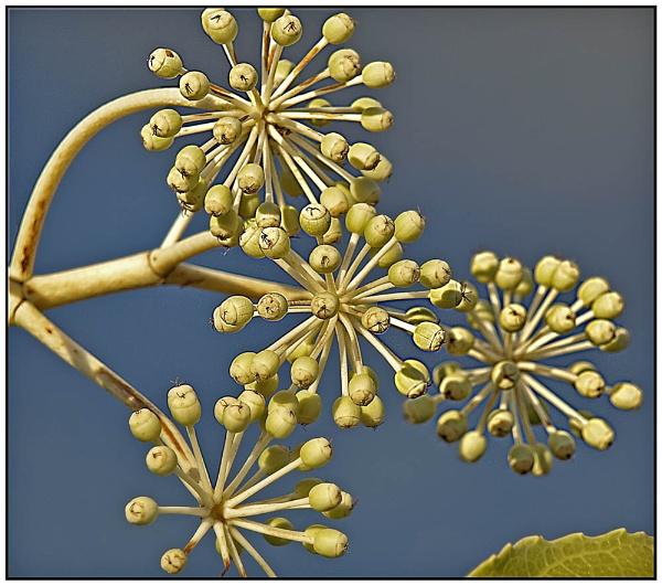 An Ivy Sky by nigele1