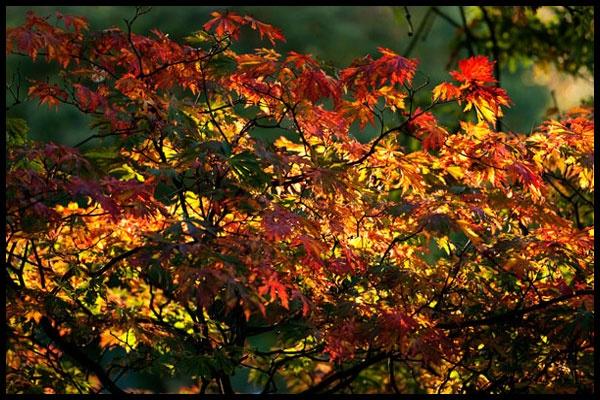 Autumnal glow by Kilcaff