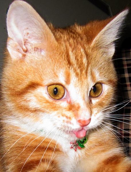 Introducing Dexter by louisemorrisonsty