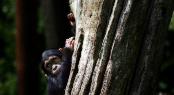 Cheeky little monkey by ickle_janie