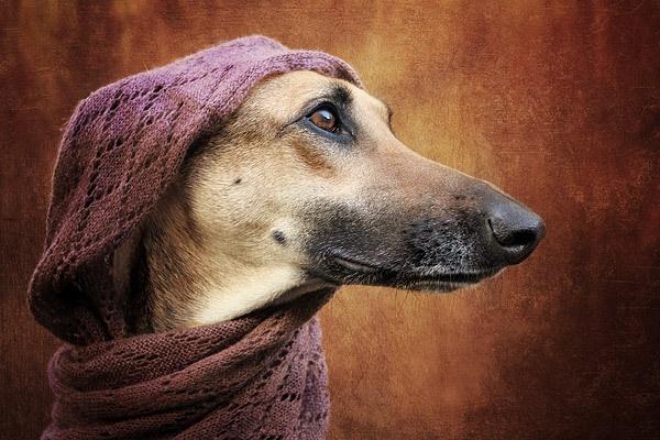 Arabian dreams by vogelsang
