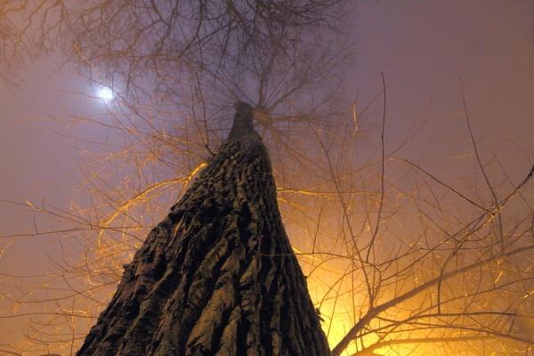 night shot by gingerbenno