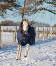 My mare, having a canter in the snow by tressypittkerby