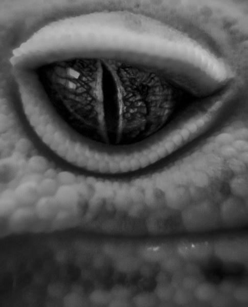 Eye of the Leopard by gvet