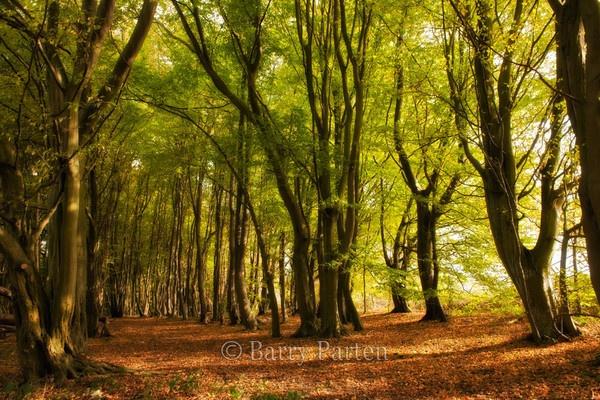Autumn Trees by bazzra1714