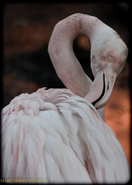 The Flamingo by CONDE