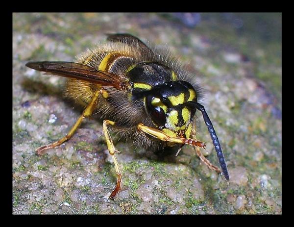Washing Wasp by brq