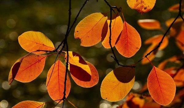 Orange Autumns by Berniea