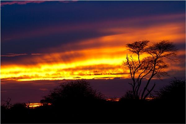 Savuti Sunset by chrissp26