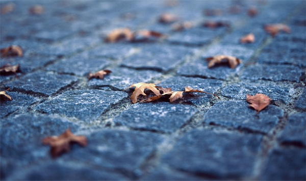 Fallen Leaves by Consulo