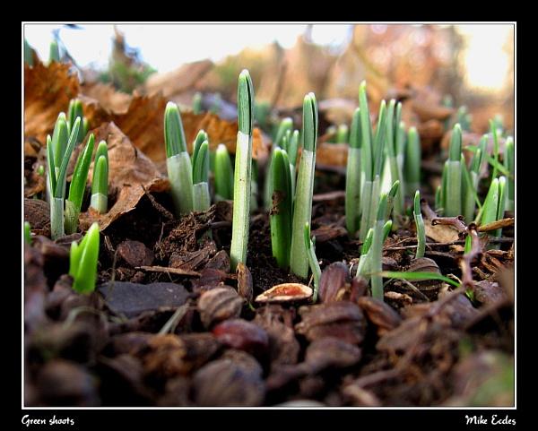 Green shoots by oldgreyheron