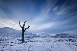 The Dead Tree