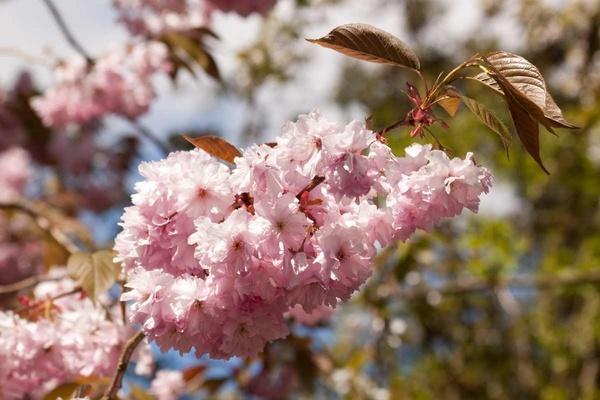 Blossom by HuntedDragon