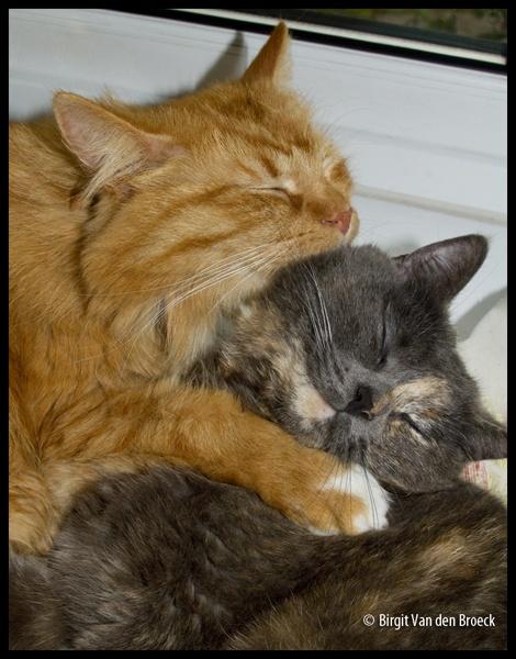 best friends by birgit