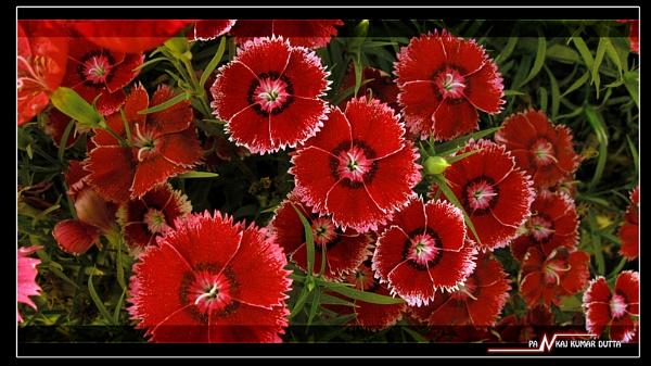 SOME RED by pankaj_dutta