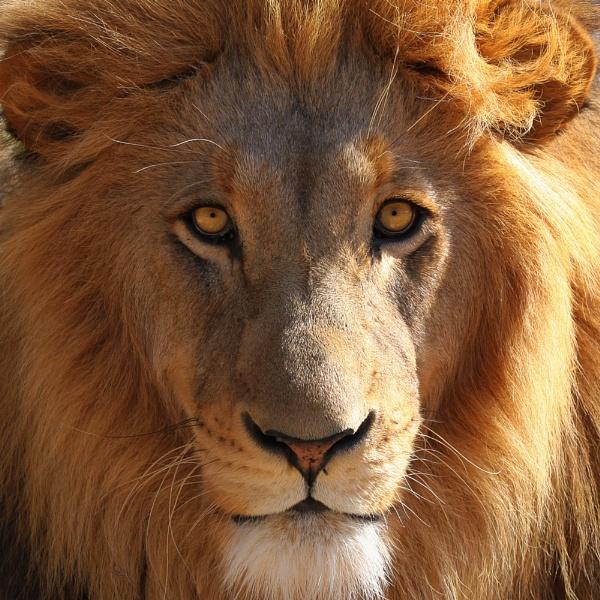 White Lion by Fairoaks