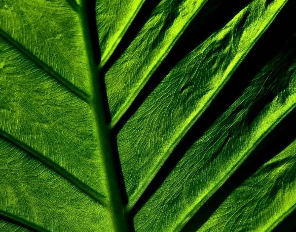 Greens by Berniea