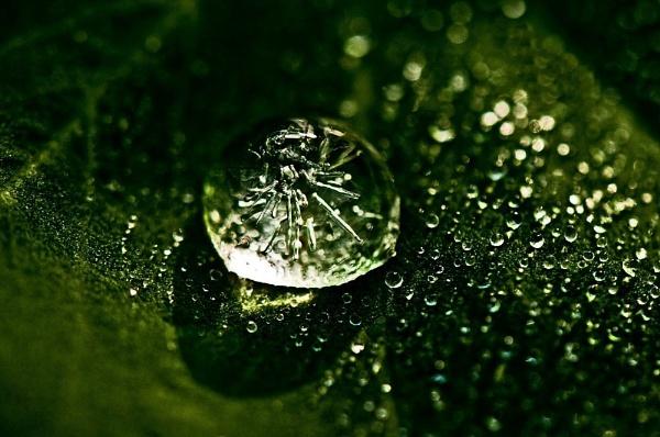 Frozen Dewdrop by Berniea