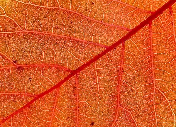 Leaf Canals by Berniea