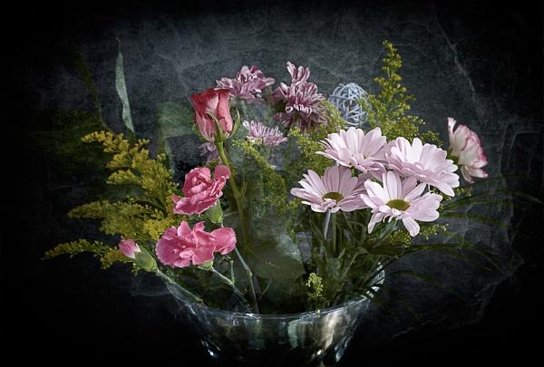 Flowers by hollkj