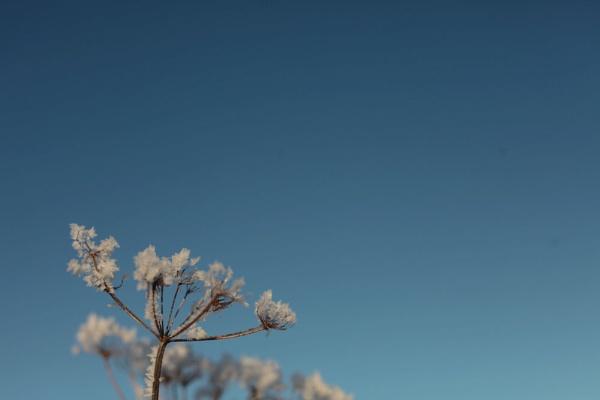Winter sunshine by mutley68