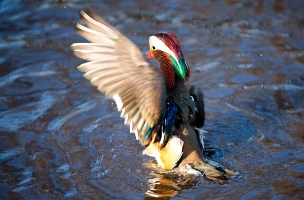 Splash! by mutley68