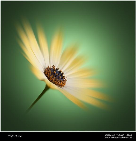 Soft Green by bfgstew