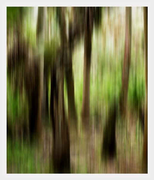 Through the trees by NikitaMorris