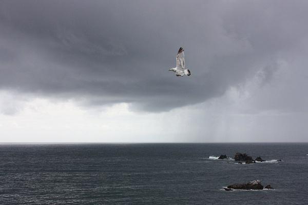 flying high... by sillygirl