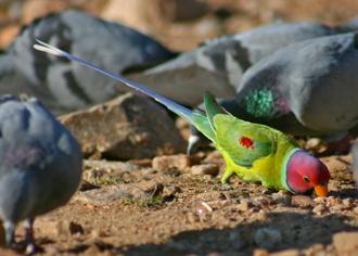 Birds by dsrathore999