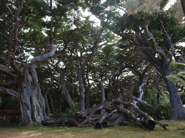 Enchanted Forrest by portholepaul