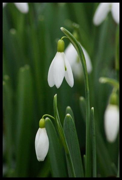 flower by alianar