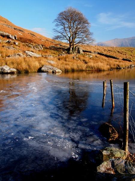 Winter Walk by hairymonkey