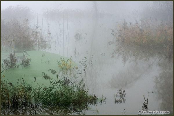 Fog by tebo