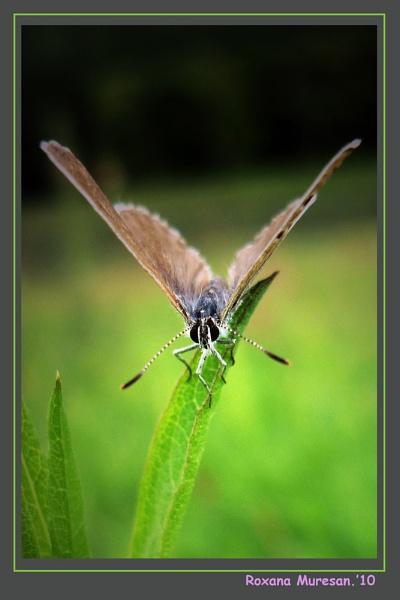 fly butterfly! by RoxanaAdina