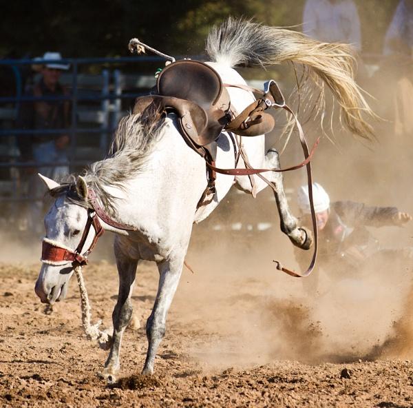 Rodeo IX by steve_evans