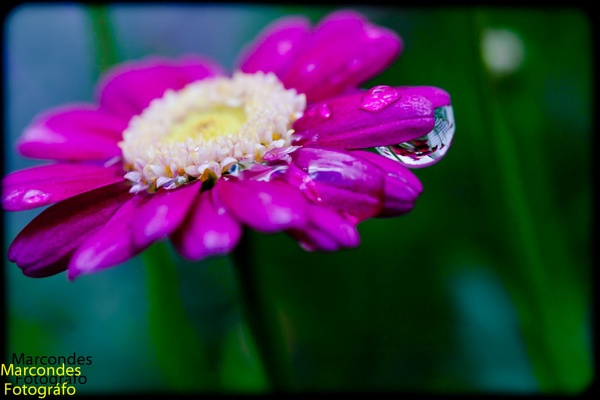 crying flower by CONDE