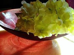 hydrangea in red bowl