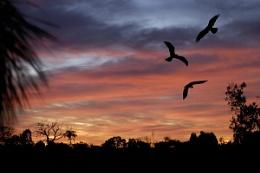 Sunrise over Casuarina
