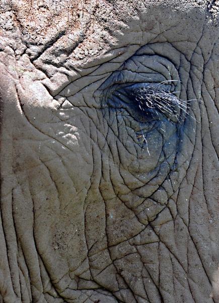 an elephants eye by fatfranksfolley