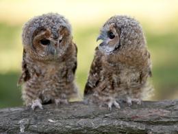 'Behave, or I'm telling mum!'