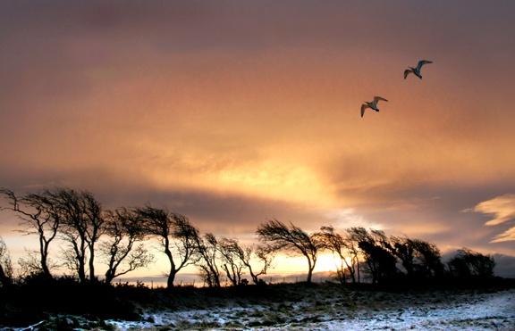 Birds over Brow by aliciabeesley