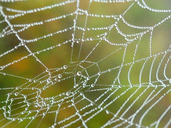 Dewy Web by konu