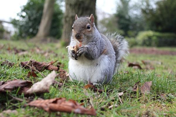 Squirrel by WorldInFocus