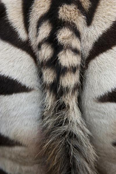 Butt by Tezz450D
