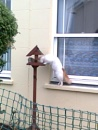 Cat feeder by DrGrafenberg